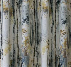 Silver Birch - Shadow